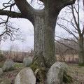 Am Großsteingrab in Lütow