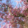Die letzte Blütenpracht in Starkow