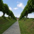 Durch die wunderschöne Festonallee erreichten wir Schloss Bothmer bei Klütz.