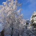 Furugården - Vinterimpressioner