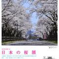 日本の桜展 /