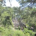 Einsam im Pinienwald gelegen