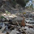 Schildkrötchen (10cm) auf dem Campingberg
