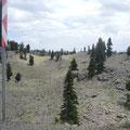 Bei 1700m wurde die Vegetation spärlicher, nur noch Zedern