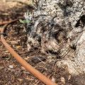 automatisierte Tropfbewässerung für große Bäume und Pflanzen: Ihr Ansprechpartner in Mainfranken