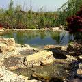 Teichanlage Garten und Landschaftsbau Gärtnerei Hupp Höchberg