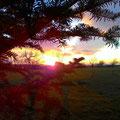 Sonnenuntergang im Grabfeld (Dezember 2014)