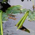 2012_seleger moor/ch ©mettler