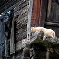 2011_geschinen/ch ©mettler