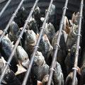 Fische grillen im Schützenheim