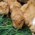 ...mampft lecker Gras...