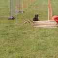 Aufbau Hundemesse 2020 unter Aufsicht