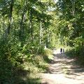 randonnée sur une ancienne route dans la forêt au dessus du village gite campagneSaint Quentin Aisne Laon Noyon Compiegne Peronne