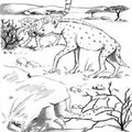 illustration jeunesse La queue de l'hippopotame - contes du Tchad
