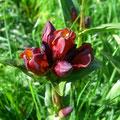 Wunderschöne Alpenflora