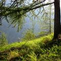 Lichtvolle Stimmung im Aufstieg zur Weira-Alp