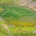 Das grüne Arniseeli