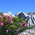 Alpenflora im Aufstieg zur Hächle