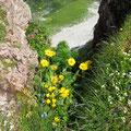 Blumen am Schafberg