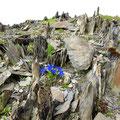 Flora und Schiefergestein verbinden sich zu einer fast surralen Impression.