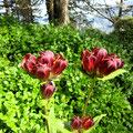 Wunderschöne Alpenflora - Wie heisst diese Naturschönheit?