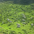 Die gut behüteten Schafe