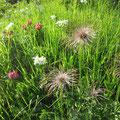 Fantastische Alpenblumenwelt