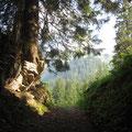 Im Aufstieg zum Wilerhorn