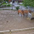 Unsere Pferde standen - zum Glück seelenruhig - rund 50 cm im Hochwasser.