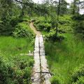 Brücke in der Moorlandschaft