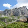 Chaiserstock - in der Westwand gibt es tolle Kletterrouten