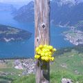 Blumenschmuck bei Spitzeren