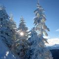 Winterzauber im Aufstieg zum Schimbrig - Dezember 2017