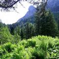 Abstieg durch unberührte Natur