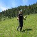 Alpwiese mit Knabenkräutern