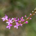 Flora im Blue Mountains National Park