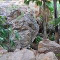 Zebedee Hot Springs - Wunderschön im fast 37 Grad warmen Wasser!!!