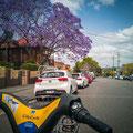 Mit dem City Bike unterwegs - New Farm