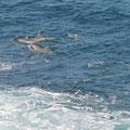 Cape Bauer Coastal Drive - Delfine!!!