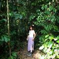 Cassiowary Walk beim Camping - auf der Suche nach dem Kasuar