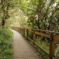 Angophora Walk zum Breadleys Head