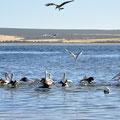 Baird Bay - Bucht