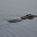 Kakadu National Park - Yellow Water Crocodile-Cruise