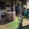 Gemseeker Caravan Park - viele Tiere leben hier...