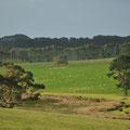 schöne Landschaft vor Cape Jervis