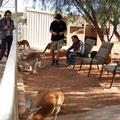 Josephine's Bar - Kangaroos