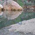 Windiana Gorge - Süsswasser-Krokodile