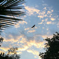 Lync-Haven Rainforest Retreat - Riesenfledermäuse (Bats) am frühen Morgen
