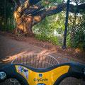 Mit dem City Bike im City Botanic Garden