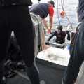 Shark-Cage-Diving-Tour